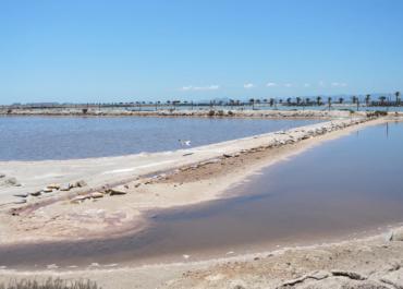Bird biodiversity in Las Salinas de San Pedro