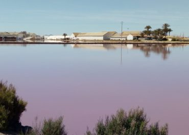 """Centuries of history in Las Salinas de San Pedro del Pinatar: from the Carthaginians until today"""