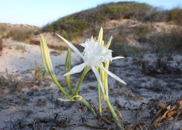 Vegetation and flora in Salinas y Arenales Regional Park of San Pedro del Pinatar