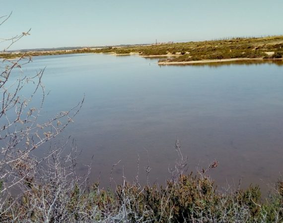 Salinera Española announces the contracting of works for the connection of the Coterillo lake with the saline circuit, within the framework of the European project LIFESALINAS LIFE17 NAT/ES/000184