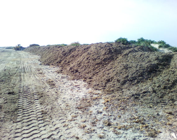 Protection of dunes with Posidonia organic rests