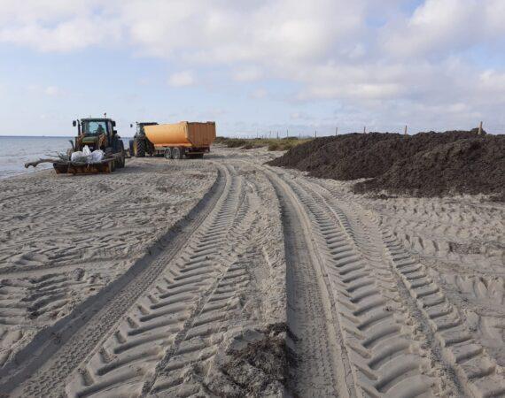 Refuerzo del vallado en la playa de La Llana con arribazones de Posidonia oceanica