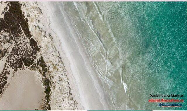 Study of the dune ecosystem in La Llana