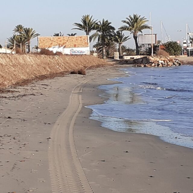 The La Llana beach dunes are reinforced with banquettes of Posidonia oceanica
