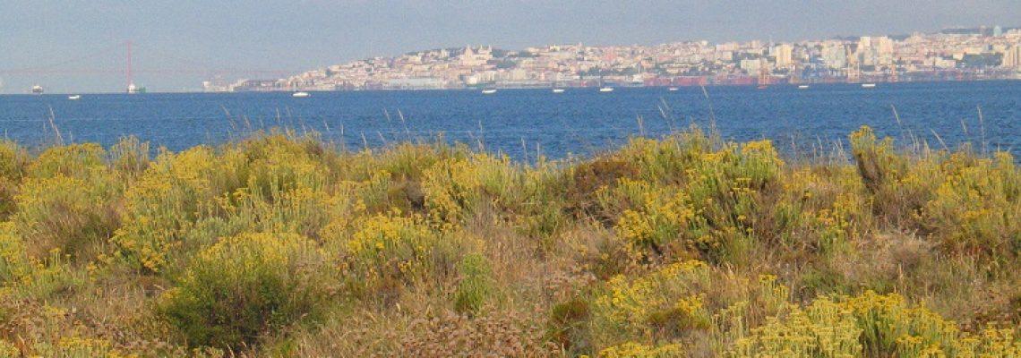Vegetação dunar na área das salinas, com a cidade de Lisboa em fundo